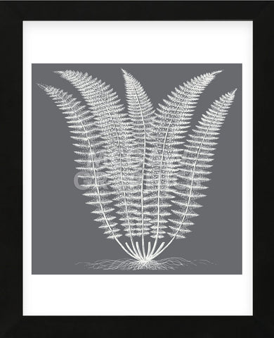 Fern (Gray & Ivory) (Framed) -  Botanical Series - McGaw Graphics