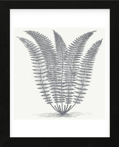 Fern (Ivory & Gray) (Framed) -  Botanical Series - McGaw Graphics