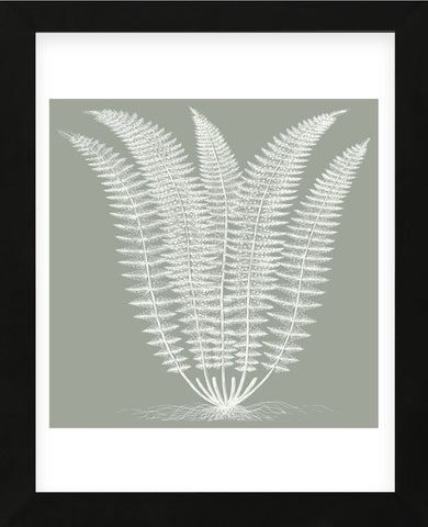 Fern (Sage & Ivory) (Framed) -  Botanical Series - McGaw Graphics