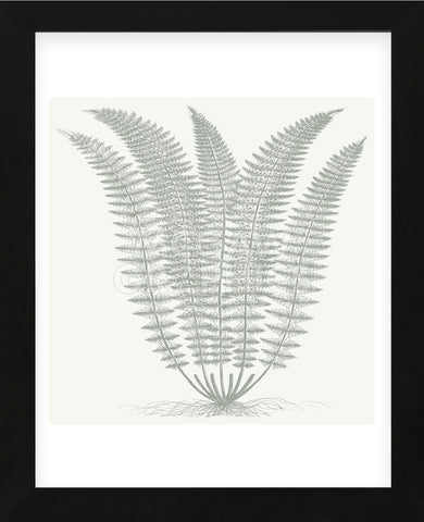 Fern (Ivory & Sage) (Framed) -  Botanical Series - McGaw Graphics