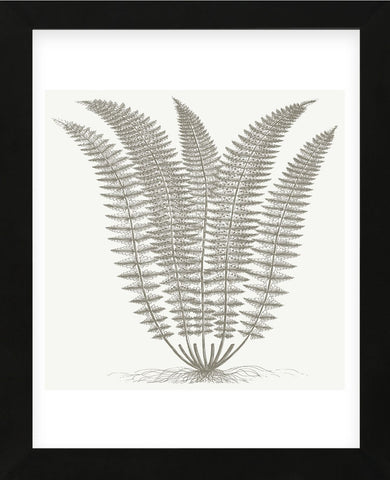 Fern (Ivory & Burlap) (Framed) -  Botanical Series - McGaw Graphics