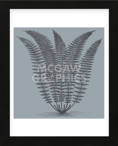 Fern (Slate & Ink) (Framed) -  Botanical Series - McGaw Graphics