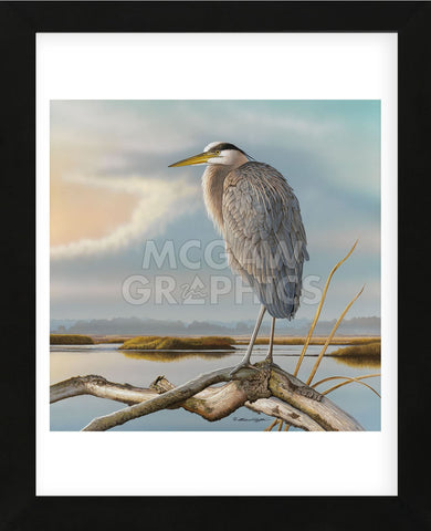 Marsh Watch - Great Blue Heron (Framed) -  Richard Clifton - McGaw Graphics