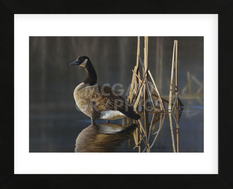 Greet the Sun - Canada Goose (Framed) -  Richard Clifton - McGaw Graphics
