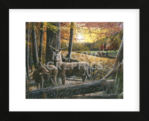 Autumn Harvest (Framed) -  Kevin Daniel - McGaw Graphics