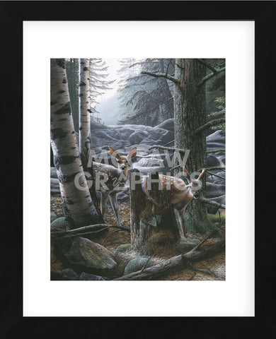 White Tail Fawns (Framed) -  Kevin Daniel - McGaw Graphics