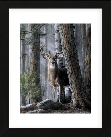 Solitary Buck (Framed) -  Kevin Daniel - McGaw Graphics