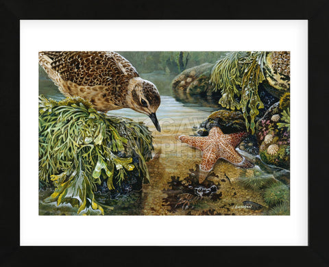 Tidal Pool Plover (Framed) -  John Dawson - McGaw Graphics