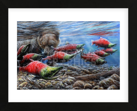The Last Run - Sockeye Salmon (Framed) -  Kevin Daniel - McGaw Graphics