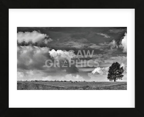 Sheep on the Horizon (Framed) -  Trent Foltz - McGaw Graphics