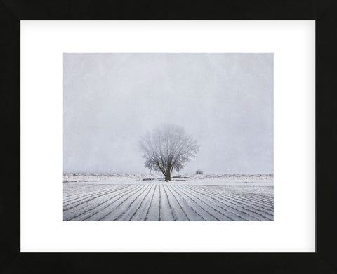 Foggy Winter Morning (Framed) -  Trent Foltz - McGaw Graphics