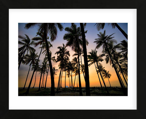 Palm Forest (Framed) -  Dennis Frates - McGaw Graphics