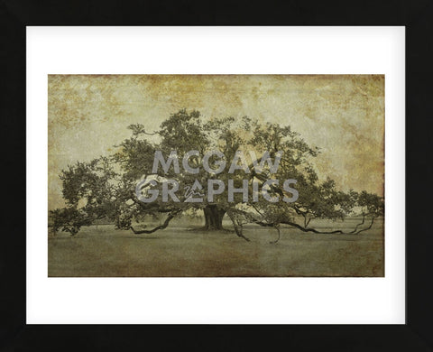 Sugarmill Oak, Louisiana (Framed) -  William Guion - McGaw Graphics