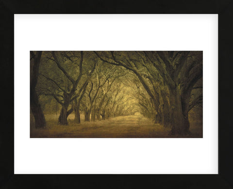 Evergreen, New Alley, Right Side (Framed) -  William Guion - McGaw Graphics