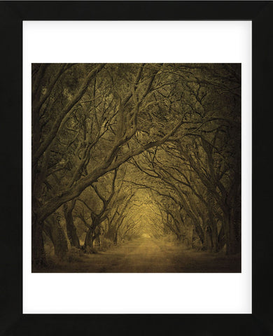 Evergreen Oak Alley (vertical view) (Framed) -  William Guion - McGaw Graphics