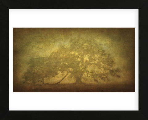 St. Joe Plantation Oak in Fog 3 (Framed) -  William Guion - McGaw Graphics