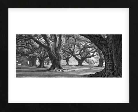 Oak Alley West Row (Framed) -  William Guion - McGaw Graphics