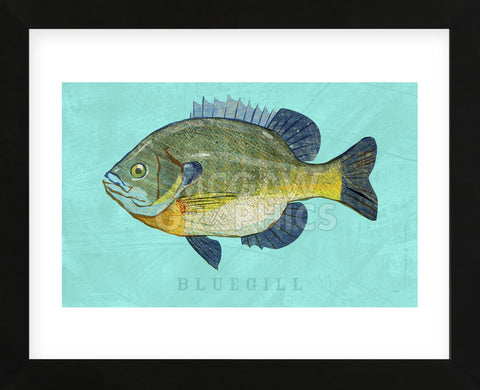 Bluegill (Framed) -  John W. Golden - McGaw Graphics