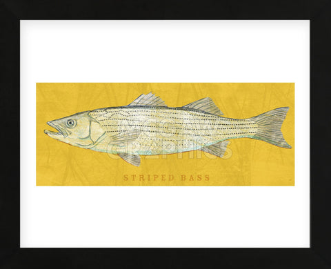 Striped Bass (Framed) -  John W. Golden - McGaw Graphics