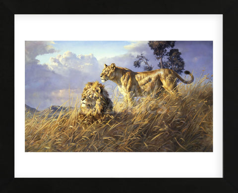 African Evening Lions (Framed) -  Donald Grant - McGaw Graphics