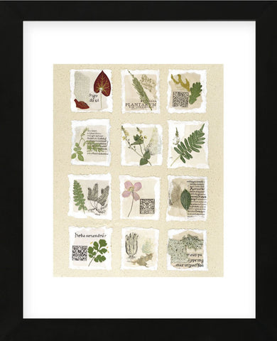 Surrey Garden Fragments  (Framed) -  Annabel Hewitt - McGaw Graphics
