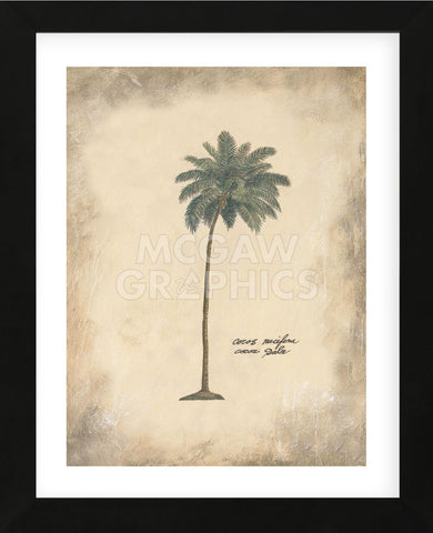 Cocoa Palm  (Framed) -  Annabel Hewitt - McGaw Graphics