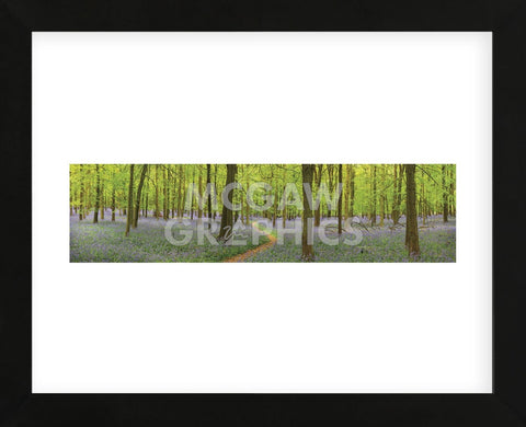 Bluebell Woods Panorama (Framed) -  Michael Hudson - McGaw Graphics