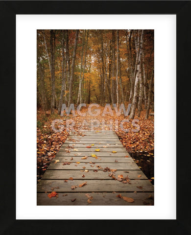 Woodland Path (Framed) -  Michael Hudson - McGaw Graphics