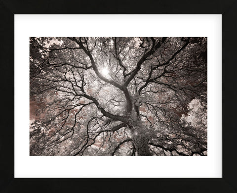 Ethereal Tree (Framed) -  Michael Hudson - McGaw Graphics