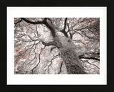 Glowing Tree (Framed) -  Michael Hudson - McGaw Graphics