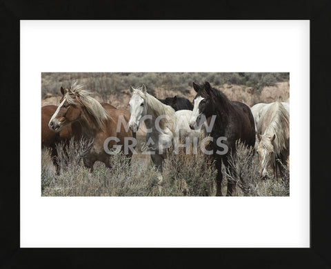 Pasture Pals (color) (Framed) -  Barry Hart - McGaw Graphics