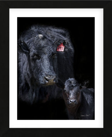 Black Angus (Framed) -  Barry Hart - McGaw Graphics
