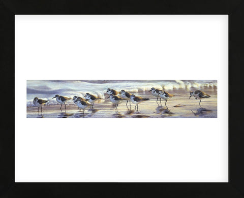 Shoreline Sanderlings (Framed) -  Matthew Hillier - McGaw Graphics