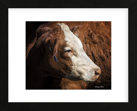 Cow #3 (Framed) -  Barry Hart - McGaw Graphics