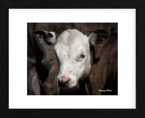 Calf #4 (Framed) -  Barry Hart - McGaw Graphics