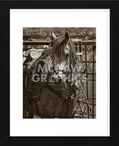 Arabian Working Cow Horse (Framed) -  Barry Hart - McGaw Graphics