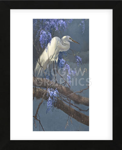 Egret in Wisteria (Framed) -  Matthew Hillier - McGaw Graphics