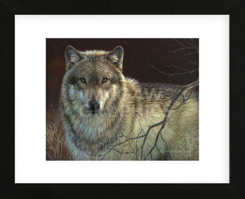 Uninterrupted Stare - Gray Wolf  (Framed) -  Joni Johnson-Godsy - McGaw Graphics