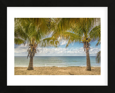 Twin Palms (Framed) -  Mary Lou Johnson - McGaw Graphics