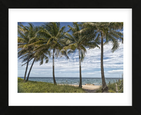 Beach Palms (Framed) -  Mary Lou Johnson - McGaw Graphics
