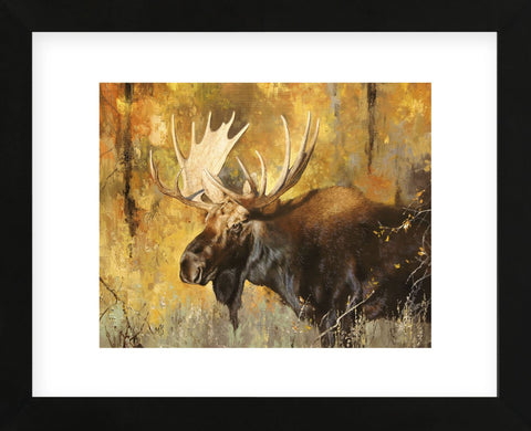 Autumn Moose Study #1 (Framed) -  Mark Kelso - McGaw Graphics