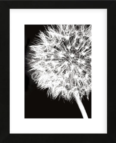 Dandelion Crop  (Framed) -  Jenny Kraft - McGaw Graphics