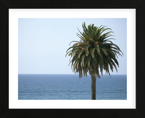 Palm at Moonlight Beach  (Framed) -  Jenny Kraft - McGaw Graphics
