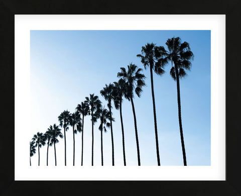 La Jolla Palms  (Framed) -  Jenny Kraft - McGaw Graphics