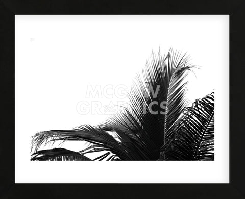 Palms 2  (Framed) -  Jamie Kingham - McGaw Graphics