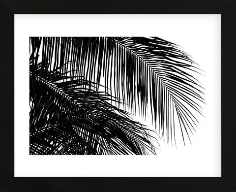Palms 3  (Framed) -  Jamie Kingham - McGaw Graphics