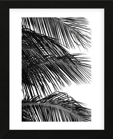 Palms 4  (Framed) -  Jamie Kingham - McGaw Graphics