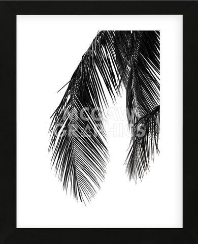 Palms 5  (Framed) -  Jamie Kingham - McGaw Graphics