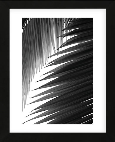 Palms 6  (Framed) -  Jamie Kingham - McGaw Graphics