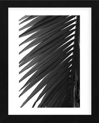 Palms 7  (Framed) -  Jamie Kingham - McGaw Graphics